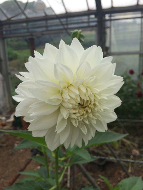 花ギフト|フラワーギフト|誕生日 花|カノシェ話題|スタンド花|ウエディングブーケ|花束|花屋|IMG_5442