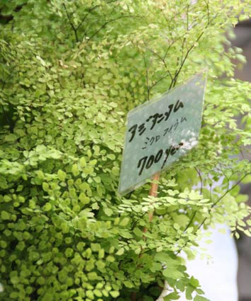 花ギフト|フラワーギフト|誕生日 花|カノシェ話題|スタンド花|ウエディングブーケ|花束|花屋|IMG_8010