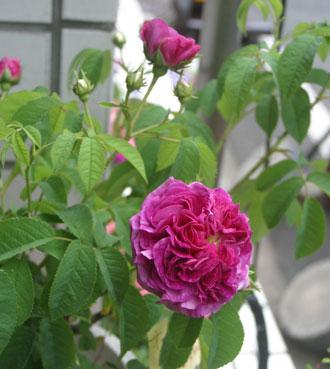 花ギフト|フラワーギフト|誕生日 花|カノシェ話題|スタンド花|ウエディングブーケ|花束|花屋|オールド