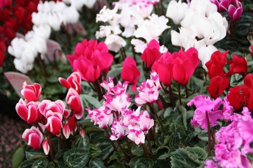 花ギフト|フラワーギフト|誕生日 花|カノシェ話題|スタンド花|ウエディングブーケ|花束|花屋|IMG_9978