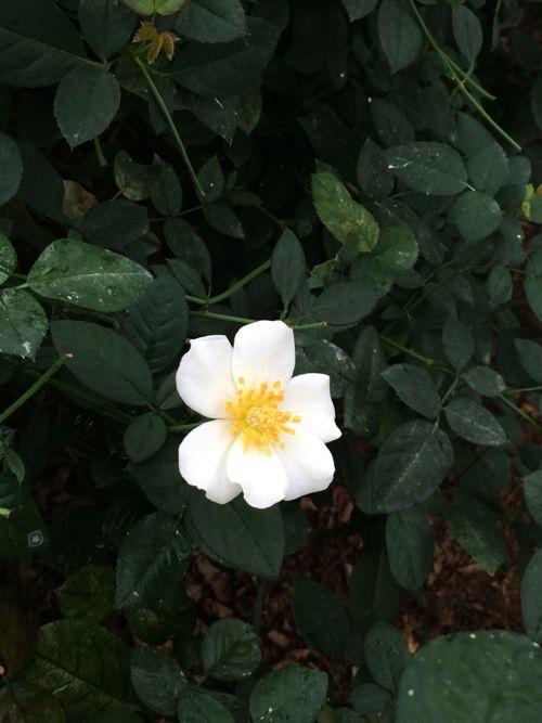 花ギフト|フラワーギフト|誕生日 花|カノシェ話題|スタンド花|ウエディングブーケ|花束|花屋|IMG_6914