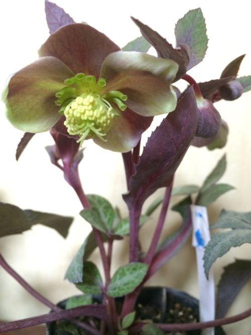 花ギフト|フラワーギフト|誕生日 花|カノシェ話題|スタンド花|ウエディングブーケ|花束|花屋|IMG_9560