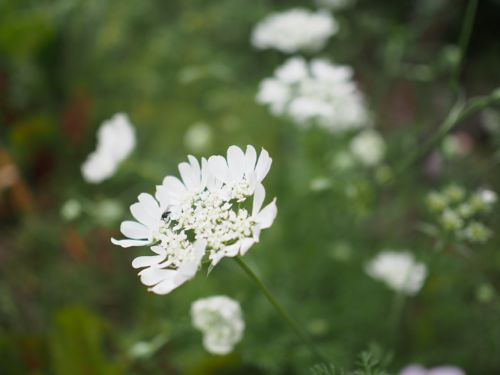 花ギフト|フラワーギフト|誕生日 花|カノシェ話題|スタンド花|ウエディングブーケ|花束|花屋|P1010741