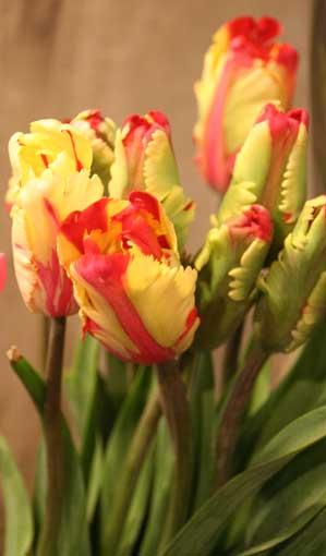 花ギフト|フラワーギフト|誕生日 花|カノシェ話題|スタンド花|ウエディングブーケ|花束|花屋|パロット