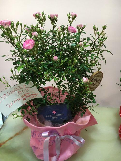 花ギフト|フラワーギフト|誕生日 花|カノシェ話題|スタンド花|ウエディングブーケ|花束|花屋|IMG_0937