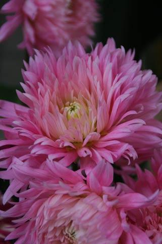 花ギフト|フラワーギフト|誕生日 花|カノシェ話題|スタンド花|ウエディングブーケ|花束|花屋|ジュディ