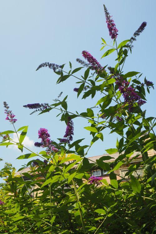 花ギフト|フラワーギフト|誕生日 花|カノシェ話題|スタンド花|ウエディングブーケ|花束|花屋|P8130180