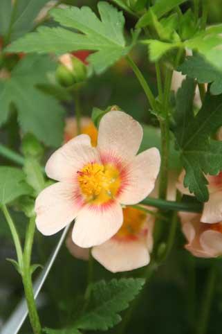 花ギフト|フラワーギフト|誕生日 花|カノシェ話題|スタンド花|ウエディングブーケ|花束|花屋|マルバ
