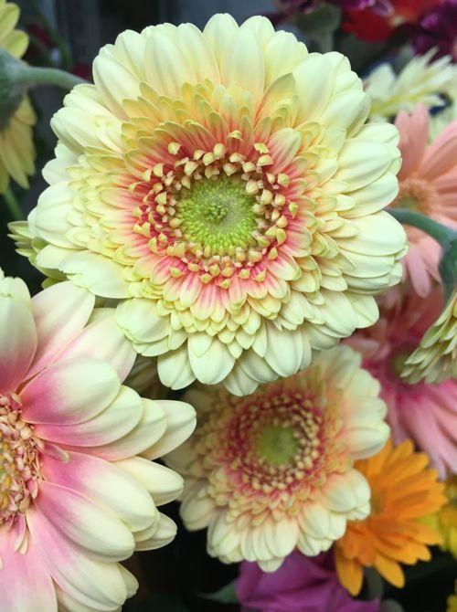 花ギフト|フラワーギフト|誕生日 花|カノシェ話題|スタンド花|ウエディングブーケ|花束|花屋|IMG_0323