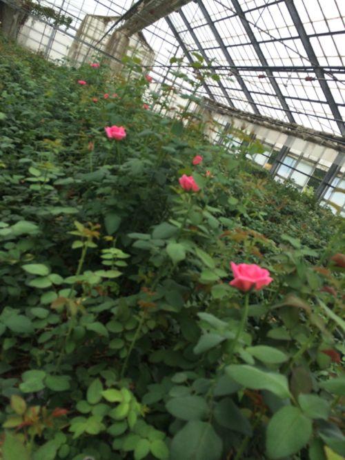 花ギフト|フラワーギフト|誕生日 花|カノシェ話題|スタンド花|ウエディングブーケ|花束|花屋|IMG_6909