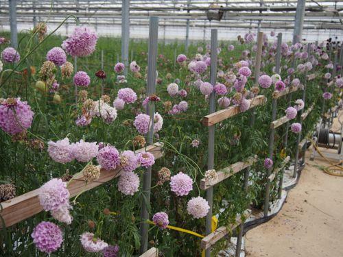 花ギフト|フラワーギフト|誕生日 花|カノシェ話題|スタンド花|ウエディングブーケ|花束|花屋|P1010047