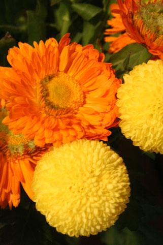 花ギフト|フラワーギフト|誕生日 花|カノシェ話題|スタンド花|ウエディングブーケ|花束|花屋|きんせんか