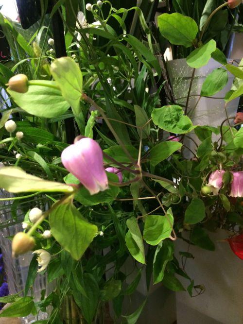 花ギフト|フラワーギフト|誕生日 花|カノシェ話題|スタンド花|ウエディングブーケ|花束|花屋|IMG_6121