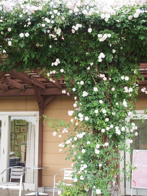 花ギフト|フラワーギフト|誕生日 花|カノシェ話題|スタンド花|ウエディングブーケ|花束|花屋|P1010844