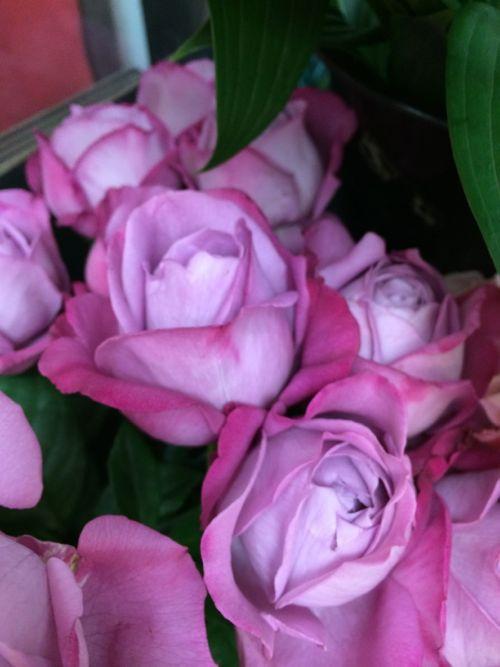 花ギフト|フラワーギフト|誕生日 花|カノシェ話題|スタンド花|ウエディングブーケ|花束|花屋|IMG_4264