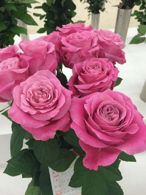花ギフト|フラワーギフト|誕生日 花|カノシェ話題|スタンド花|ウエディングブーケ|花束|花屋|IMG_7107