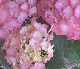 花ギフト フラワーギフト 誕生日 花 カノシェ話題 スタンド花 ウエディングブーケ 花束 花屋 あじさい