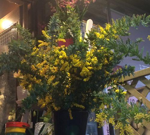 花ギフト|フラワーギフト|誕生日 花|カノシェ話題|スタンド花|ウエディングブーケ|花束|花屋|IMG_9859