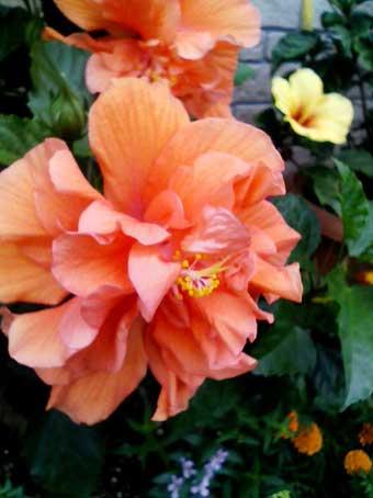 花ギフト|フラワーギフト|誕生日 花|カノシェ話題|スタンド花|ウエディングブーケ|花束|花屋|八重ハイビ