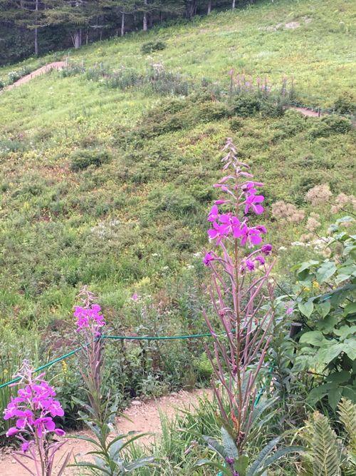 花ギフト|フラワーギフト|誕生日 花|カノシェ話題|スタンド花|ウエディングブーケ|花束|花屋|IMG_3401