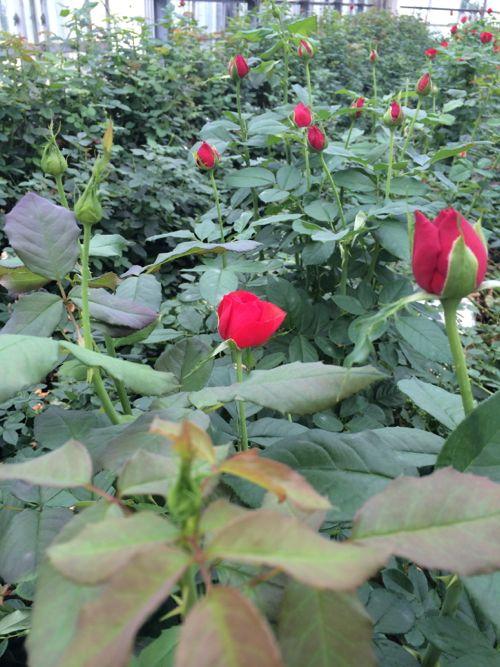 花ギフト|フラワーギフト|誕生日 花|カノシェ話題|スタンド花|ウエディングブーケ|花束|花屋|IMG_6915