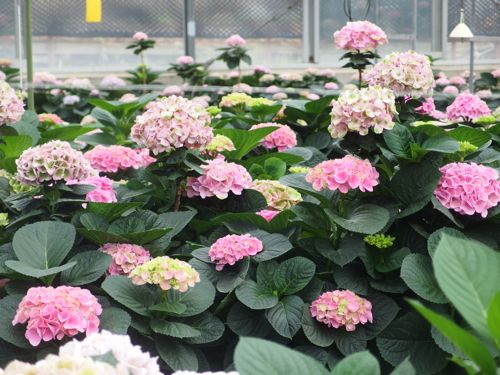 花ギフト|フラワーギフト|誕生日 花|カノシェ話題|スタンド花|ウエディングブーケ|花束|花屋|P6080108