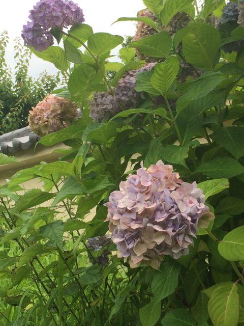 花ギフト|フラワーギフト|誕生日 花|カノシェ話題|スタンド花|ウエディングブーケ|花束|花屋|IMG_1745