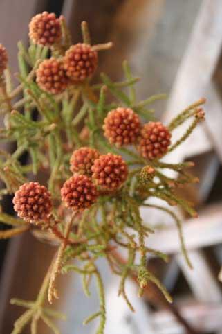 花ギフト|フラワーギフト|誕生日 花|カノシェ話題|スタンド花|ウエディングブーケ|花束|花屋|ミレット