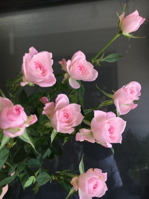 花ギフト|フラワーギフト|誕生日 花|カノシェ話題|スタンド花|ウエディングブーケ|花束|花屋|IMG_0991