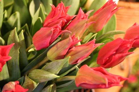 花ギフト|フラワーギフト|誕生日 花|カノシェ話題|スタンド花|ウエディングブーケ|花束|花屋|プリティウーマ