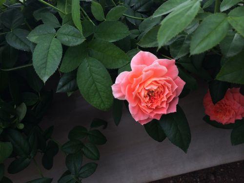 花ギフト|フラワーギフト|誕生日 花|カノシェ話題|スタンド花|ウエディングブーケ|花束|花屋|IMG_6921