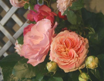 花ギフト|フラワーギフト|誕生日 花|カノシェ話題|スタンド花|ウエディングブーケ|花束|花屋|シーザー