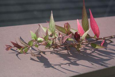 花ギフト|フラワーギフト|誕生日 花|カノシェ話題|スタンド花|ウエディングブーケ|花束|花屋|IMG_5539
