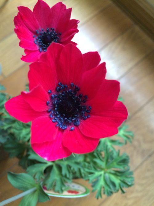 花ギフト|フラワーギフト|誕生日 花|カノシェ話題|スタンド花|ウエディングブーケ|花束|花屋|IMG_9875