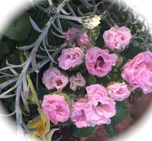 花ギフト|フラワーギフト|誕生日 花|カノシェ話題|スタンド花|ウエディングブーケ|花束|花屋|IMG_9088