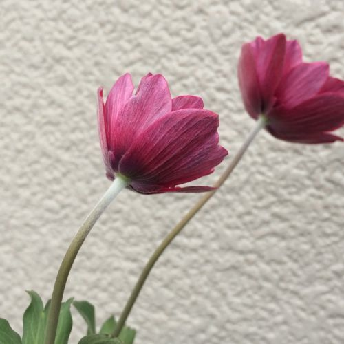 花ギフト|フラワーギフト|誕生日 花|カノシェ話題|スタンド花|ウエディングブーケ|花束|花屋|IMG_9891