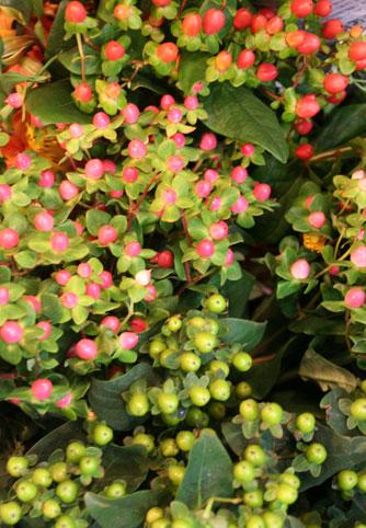 花ギフト フラワーギフト 誕生日 花 カノシェ話題 スタンド花 ウエディングブーケ 花束 花屋 ヒペリカム