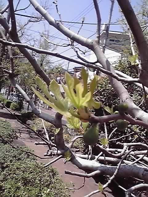 花ギフト|フラワーギフト|誕生日 花|カノシェ話題|スタンド花|ウエディングブーケ|花束|花屋|11-04-17_001