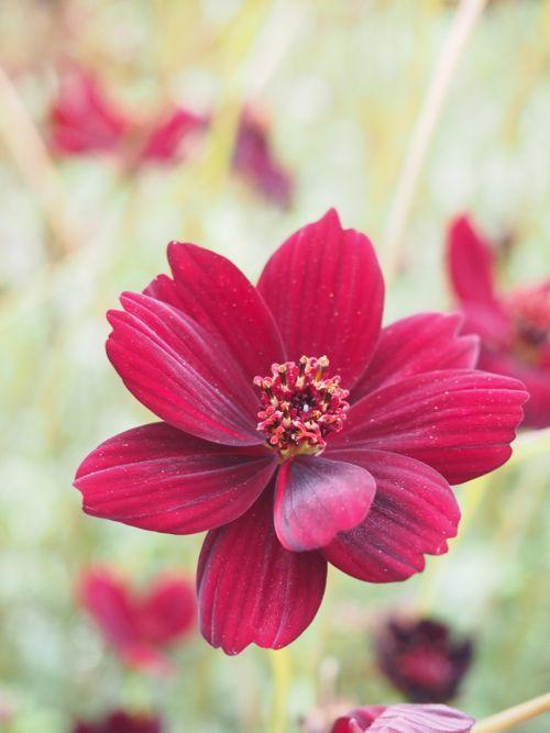 花ギフト|フラワーギフト|誕生日 花|カノシェ話題|スタンド花|ウエディングブーケ|花束|花屋|P1010117