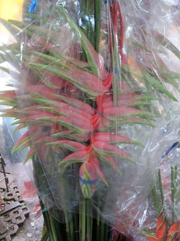花ギフト|フラワーギフト|誕生日 花|カノシェ話題|スタンド花|ウエディングブーケ|花束|花屋|ヘリコニア