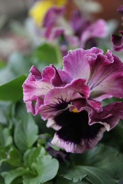 花ギフト|フラワーギフト|誕生日 花|カノシェ話題|スタンド花|ウエディングブーケ|花束|花屋|IMG_5543