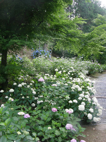 花ギフト|フラワーギフト|誕生日 花|カノシェ話題|スタンド花|ウエディングブーケ|花束|花屋|ajisai