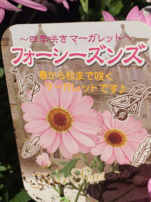 花ギフト|フラワーギフト|誕生日 花|カノシェ話題|スタンド花|ウエディングブーケ|花束|花屋|IMG_0032
