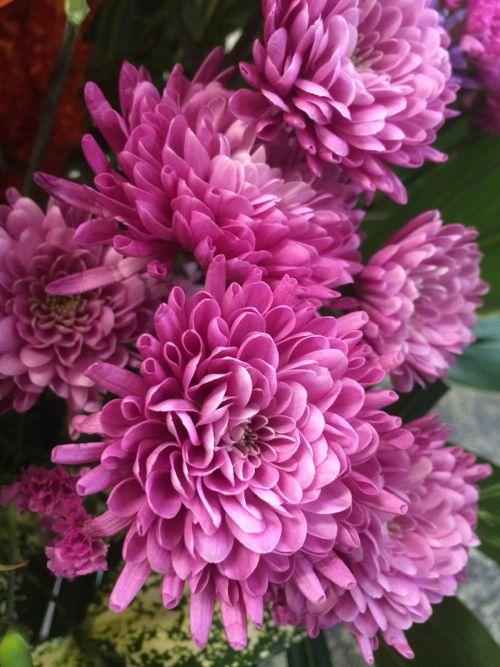 花ギフト|フラワーギフト|誕生日 花|カノシェ話題|スタンド花|ウエディングブーケ|花束|花屋|IMG_6405