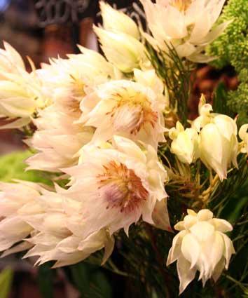 花ギフト|フラワーギフト|誕生日 花|カノシェ話題|スタンド花|ウエディングブーケ|花束|花屋|セルリア