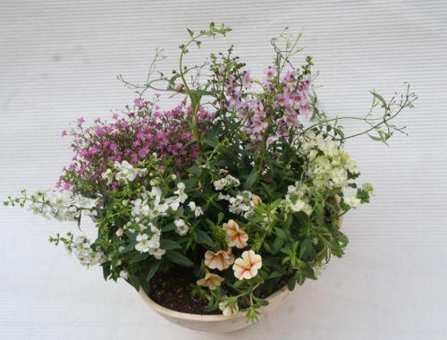 花ギフト|フラワーギフト|誕生日 花|カノシェ話題|スタンド花|ウエディングブーケ|花束|花屋|こはらさん 寄せ