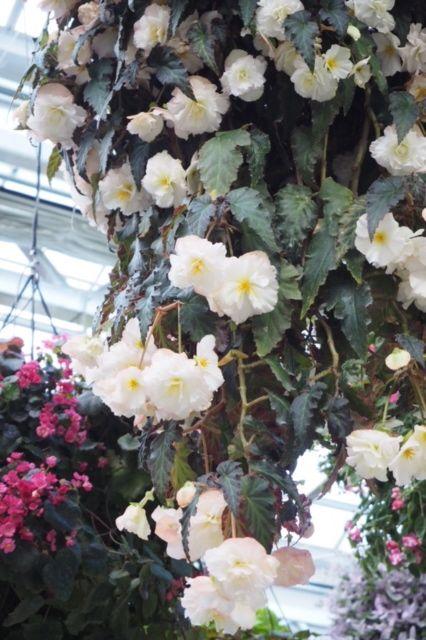 花ギフト|フラワーギフト|誕生日 花|カノシェ話題|スタンド花|ウエディングブーケ|花束|花屋|IMG_1876