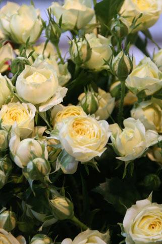 花ギフト|フラワーギフト|誕生日 花|カノシェ話題|スタンド花|ウエディングブーケ|花束|花屋|イエロー