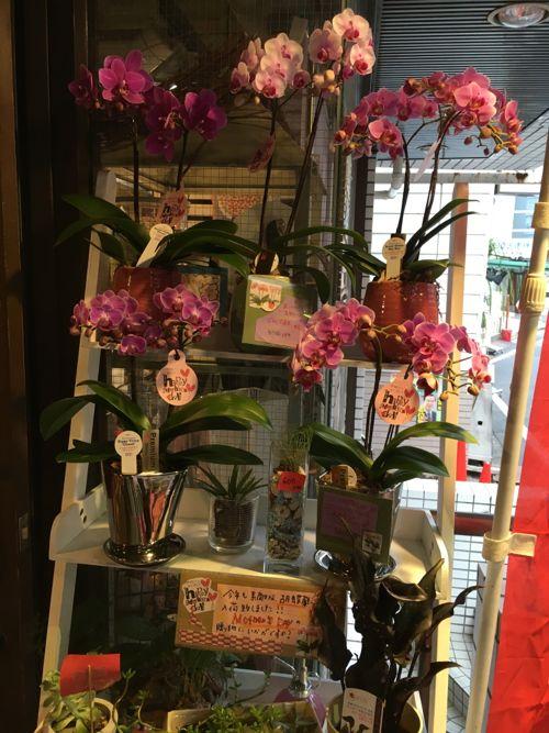 花ギフト|フラワーギフト|誕生日 花|カノシェ話題|スタンド花|ウエディングブーケ|花束|花屋|IMG_0939