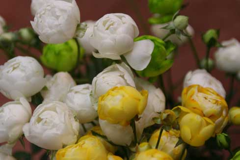 花ギフト フラワーギフト 誕生日 花 カノシェ話題 スタンド花 ウエディングブーケ 花束 花屋 ウィット